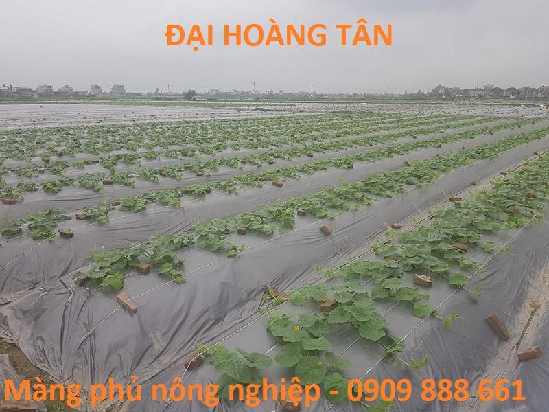 Màng phủ nông nghiệp